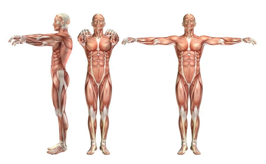 occlusione e postura gnatologia integrata federica casini